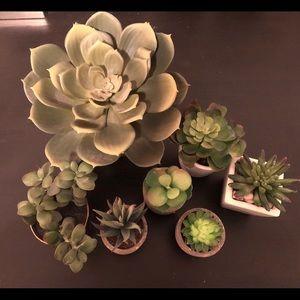 Fake Succulent Plants Trendy Tumblr Cactus